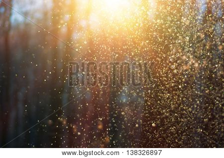 Flying magical snow in the forest at sunset before Christmas defocused background