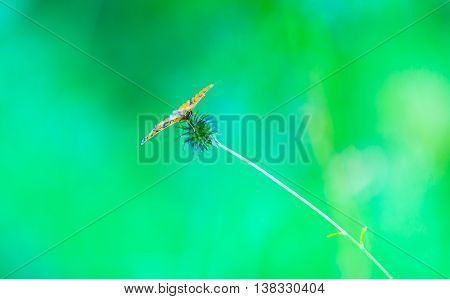 Butterfly Sitting On Plant On Green Background