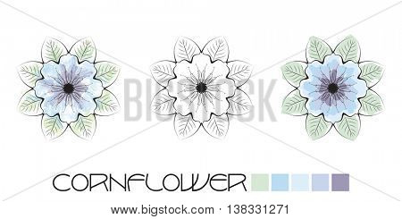 Stylized Cornflower colouring, page with watercolour and flat colour examples and a black and white option to complete yourself. EPS10 vector format
