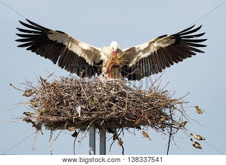 Two storks on nest closeup, family storks