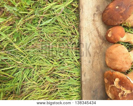 Mushrooms on grass background with space for text