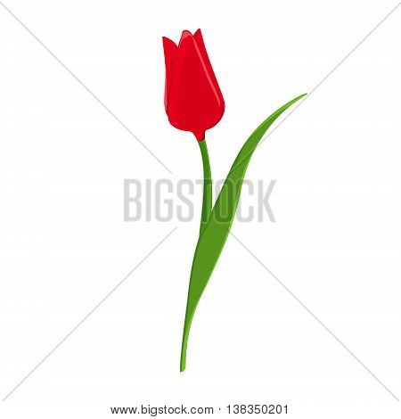 Vector illustration beautiful red tulip. Spring flowers. Red flower flat icon