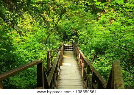 a picture of an exterior Pacific Northwest forest wood boardwalk bridge