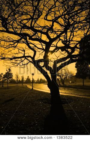 Tree On A Sunset Sky