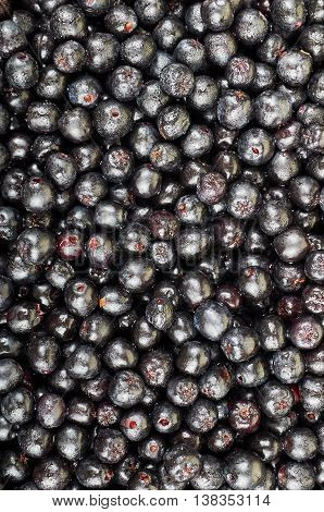 A pile of chokeberry fruits. Fruit background