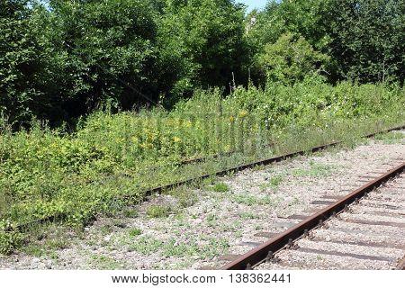 old rail tracks overgrown