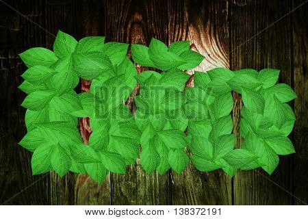 Bio text from fresh leaves on beautiful background from wood