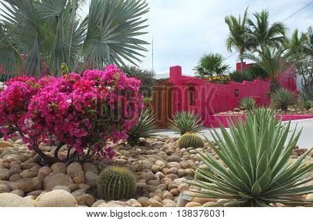 Bright pink wall and flowers, San Jose del Cabo, Baja California Sur, Mexico