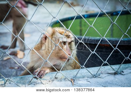 Sad Monkey In A Cage At The Zoo.
