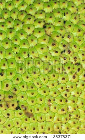 Jackfruit peel a small button consecutive yellowish green.