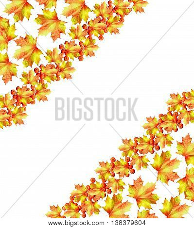 autumn leaves isolated on white background. maple