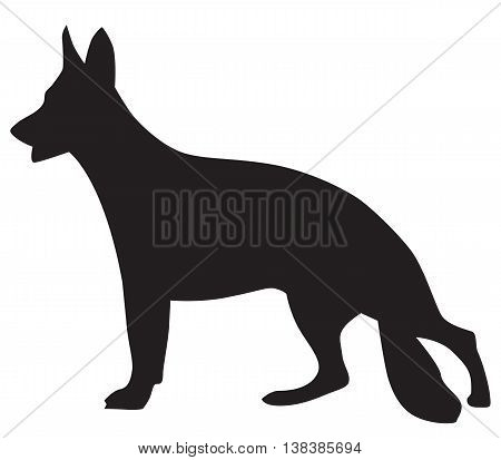 dog animal barking black chain collar dog domestication