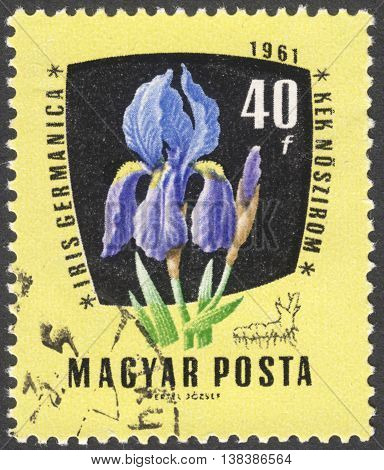 MOSCOW RUSSIA - JANUARY 2016: a post stamp printed in HUNGARY shows a flower Iris Germanica the series