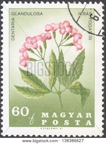 MOSCOW RUSSIA - JANUARY 2016: a post stamp printed in HUNGARY shows a portrait of Pal Kitaibel and Dentaria glandulosa the series