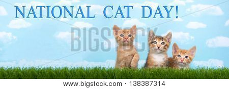 Three kittens in tall grass with blue sky background white fluffy clouds. Looking forward. Banner format sized for popular social media. National cat day is October 29th