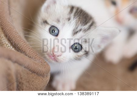 little baby cat portrait, close up image