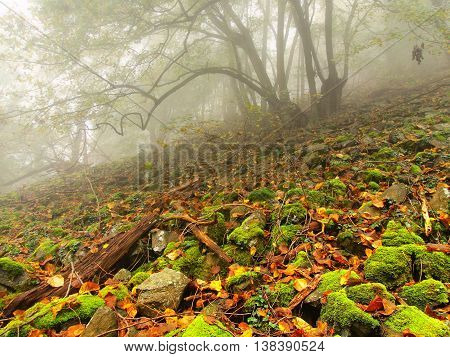 Stony field with mossy boulders in misty forest. Early morning fog.
