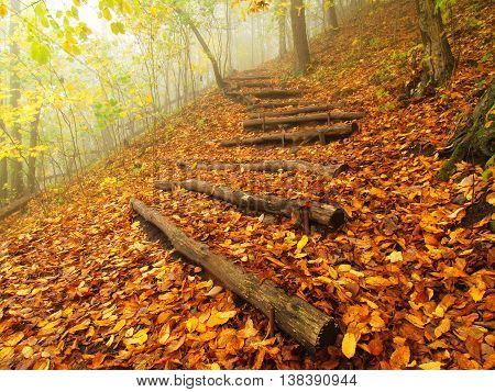 Wooden trunk steps in golden autumn forest, tourist footpath.