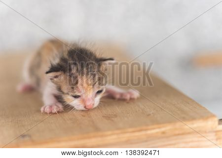 newborn cat portrait, close up image