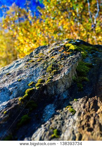 Vertical Vibrant Norway Moss On Rock Nature Bokeh Background Bac
