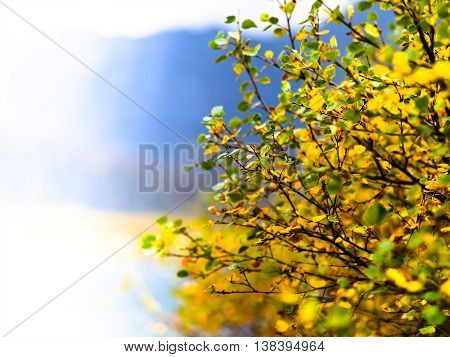 Horizontal Vivid Right Aligned Yellow Bush Bokeh Background Back