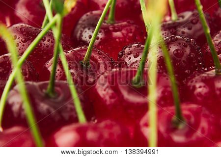 Cherry background. Ripe fresh rich cherries with tails and drops of water. Macro. Texture. Fruit background. Food background.