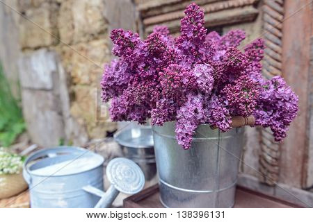 Purple lilac in metal bucket on porch