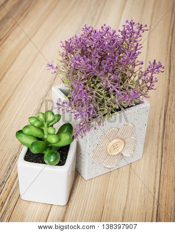 Small decorative potted plants on the wooden background. Home decoration. Vertical composition.