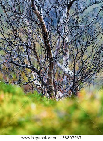 Vertical Vivid Norway Autumn Tree Green Grass Bokeh Nature Backg