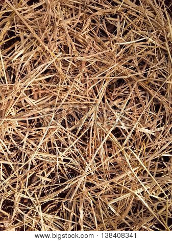 close up dry straw on the ground