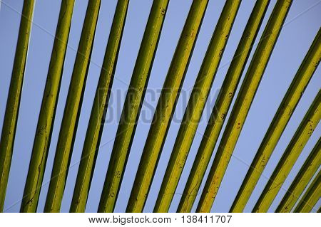 close up fresh green coconut leaves background