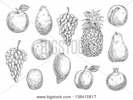 Sketch of vegetarian fruits in retro style. Naturally grown ripe apple and fresh mango, exotic pineapple and mature avocado, raw melon and tasty apricot, grape branch and kiwi, pear and garnet or pomegranate, plum.