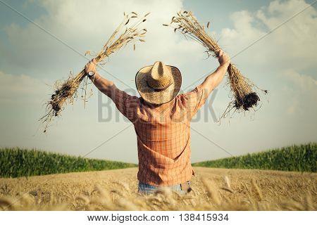 Farmer checks the wheat grain in the field