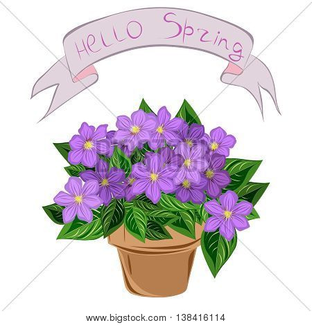 Clematis in a pot, vector image with inscription hello spring