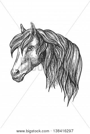 Calm looking horse head sketch with charming curly mane, happy glance. For mascot design or wildlife symbol, fauna or equestrian sport themes.