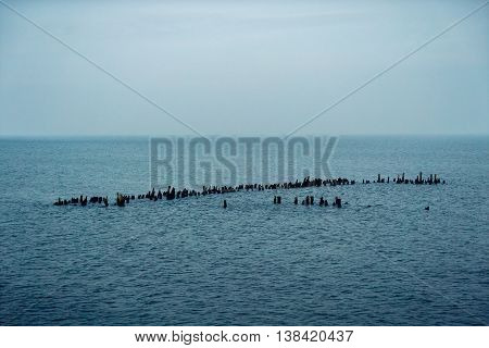 wooden Poles In The surface of wide Sea panorama