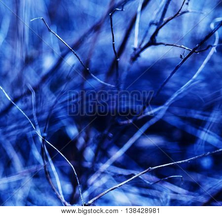 Square vivid blueish branches abstraction background backdrop