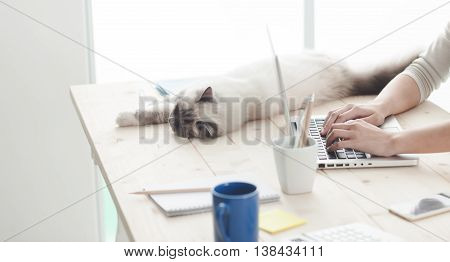 Sleepy Cat On A Desktop