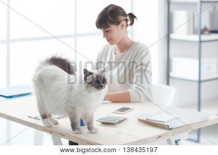 Happy Cat On A Desktop
