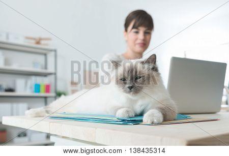 Cat Lying Down On A Desktop