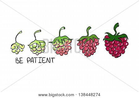 Illustration of raspberry ripening. Creative concept of development with text - be patient.