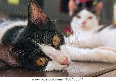A black-white kitten lying on a floor.