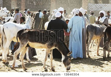 DARAW, EGYPT - DECEMBER 29: Arab people are bargaining at weekly camel and livestock market on December 29, 2009 at Daraw town near the Aswan.