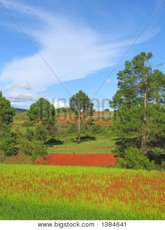 Tree And Flowers Of A Colored Countryside With Red Ground, Kalaw, Myanmar