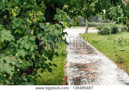 Heavy rain drops in the park. Wet paving stone.