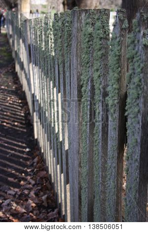 Old timber fence covered in lichen and moss