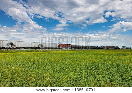 Freight Train Rolling Past Canola Field Under Blue Sky
