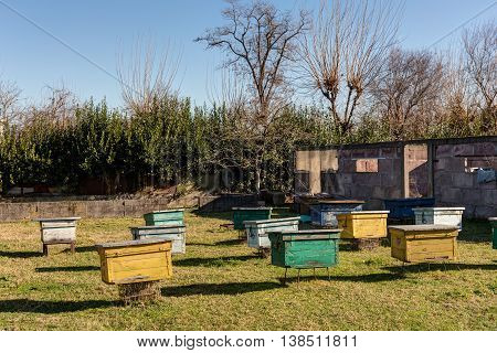 rural apiary with colorful beehives on a sunny day