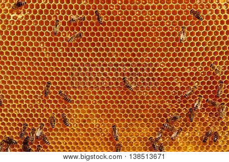 Working bees on honeycomb backgrounds insects honey