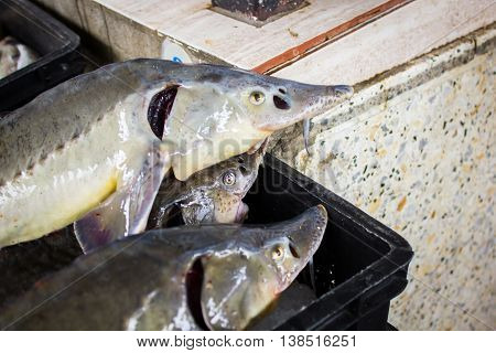 a lot of different fish on the shelves at the fish market